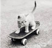 cat-on-skateboard